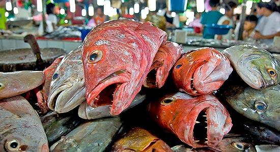 dead%20fish