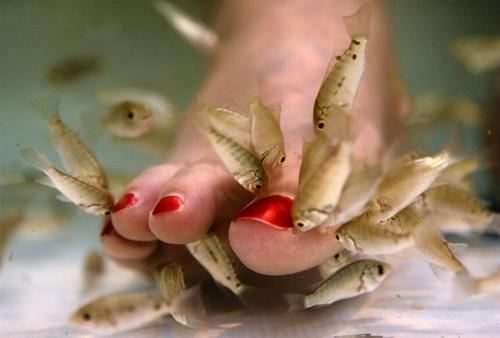Fish Pedicure doctor