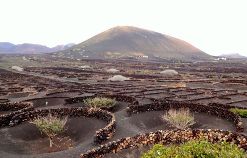 vineyards lanzarote