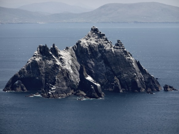 puffin island gannets