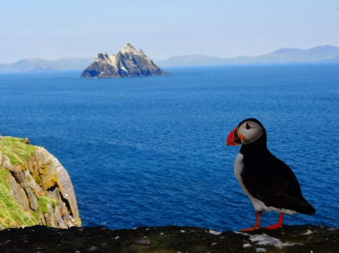 puffins skellig michael