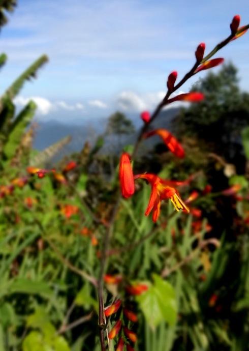 flowers malaysia