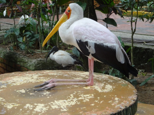 pelican on table