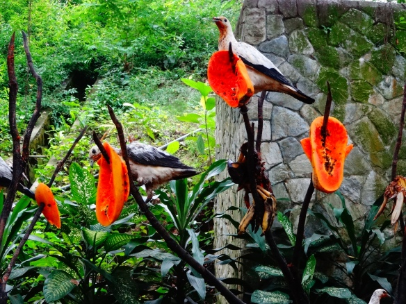 fruit bird food