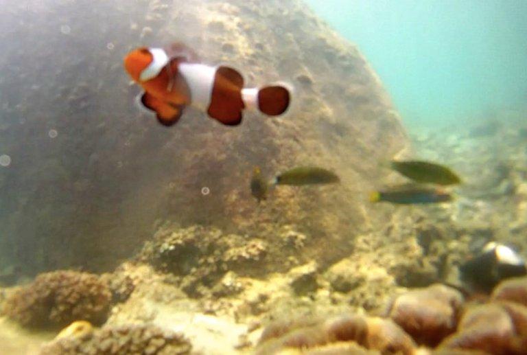 Amazing snorkeling wIth NEMO!