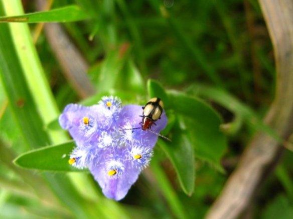 bug ethiopia
