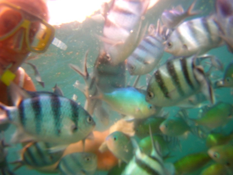 trigger fish malaysia