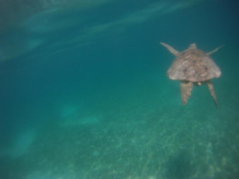 turtle snorkeling malaysia