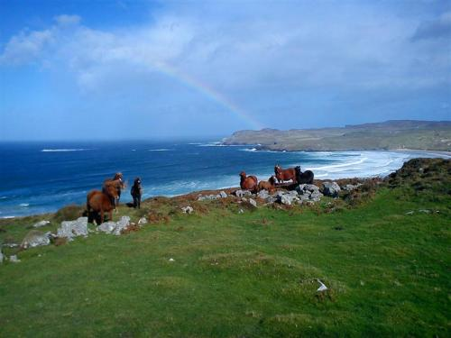 dunfanaghy donegal horses