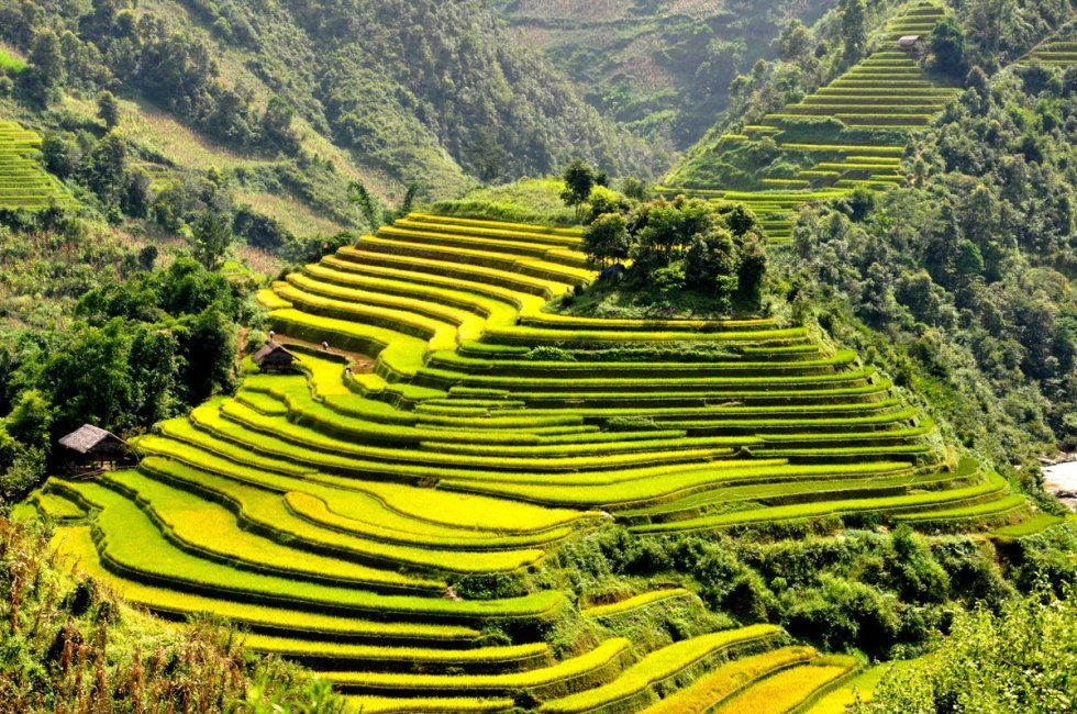 The terraced rice fields of Sapa, Northern Vietnam