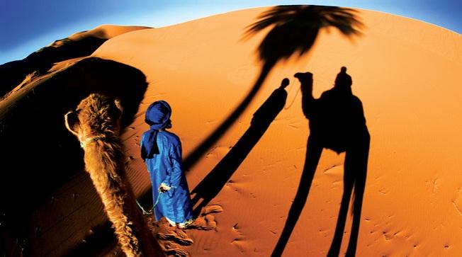morocoo-camels